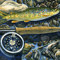 brown trout rush creek Print by Mark Jennings