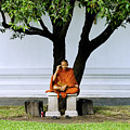 Buddhist monk sits under tree Print by Ray Laskowitz - Printscapes