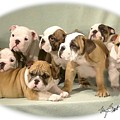 Bulldog Family Pups Print by Maxine Bochnia