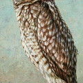 Burrowing Owl Poster by James W Johnson