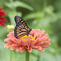 Butterflies and Blossoms Print by Bill Cannon