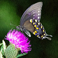 Butterfly and Thistle Poster by Jeff Kolker
