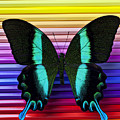 Butterfly on colored pencils Poster by Garry Gay