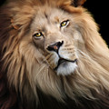 Cameron Poster by Big Cat Rescue