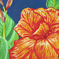 Canna Flower Poster by Adam Johnson