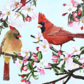 Cardinals and Apple Blossoms Poster by Johanna Lerwick