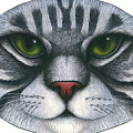 Cat Oval Face Poster by Carol Wilson