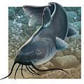 catfish Print by Valerian Ruppert