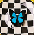Checker plate and blue butterfly Print by Garry Gay
