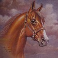 Chestnut Quarter Horse Print by Dorothy Coatsworth
