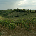 Chianti Vineyards In Tuscany Print by Todd Gipstein