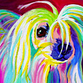 Chinese Crested - Fancy Pants Print by Alicia VanNoy Call