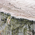 Chinstrap Penguins Crossing An Print by Maria Stenzel