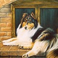 Collie on the Hearth Print by Karen Coombes