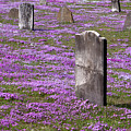 Colonial Tombstones Amidst Graveyard Phlox Poster by John Stephens