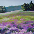 Concord Loosestrife Poster by Jeanne Rosier Smith