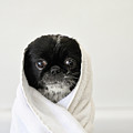 Cute Dog Wrapped Print by emma mayfield photography