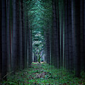 Dark side of Forest Print by Svetlana Sewell