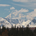 Denali in Broad Pass Print by Donna Quante