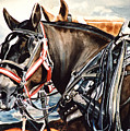 Draft Mules Print by Nadi Spencer
