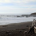 Driftwood and Moonstone Beach Print by Linda Woods