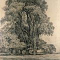 Elm trees in Old Hall Park Poster by John Constable