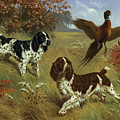 Energetic English Springer Spaniels Poster by Walter A. Weber
