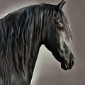 Equus Poster by Corey Ford