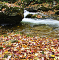 Fall Color Rushing Stream Poster by Thomas R Fletcher