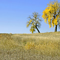 Fall days in Fort Collins CO Print by James Steele