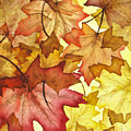Fall Maple Leaves Poster by Christina Meeusen