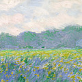 Field of Yellow Irises at Giverny Print by Claude Monet