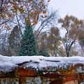 First Colorful Autumn Snow Poster by James BO  Insogna