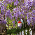Flower - Wisteria - A house of my own Poster by Mike Savad