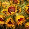 Flowers - Sunflowers - You're my only sunshine Print by Mike Savad