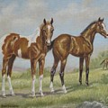 Foals in Pasture Print by Dorothy Coatsworth
