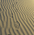 Footprints in the Sand Print by Joe  Palermo