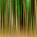 Forest Abstract04 Print by Svetlana Sewell