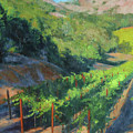 Four Rows Napa Valley Poster by Anna Bain