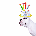 French Bulldog With Birthday Cake Print by MAIKA 777