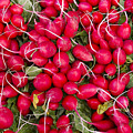 Fresh red radishes Poster by John Trax