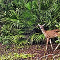 From The Palmetto Bushes Print by Jan Amiss Photography