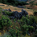 Golden Hills of Summer Print by Kathy Yates