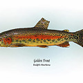 Golden Trout Poster by Ralph Martens