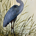 Great Blue Heron Splendor Print by James Williamson
