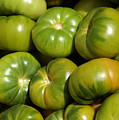 Green Tomatoes Print by Frank Tschakert