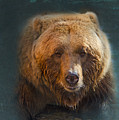 Grizzly Bear Portrait Poster by Betty LaRue