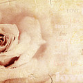 Grungy rose background Print by Anna Omelchenko