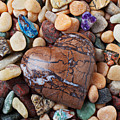 Heart stone among river stones Print by Garry Gay