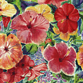 Hibiscus Impressions Poster by Patti Bruce - Printscapes